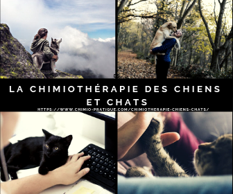 chimiotherapie-chien-chat