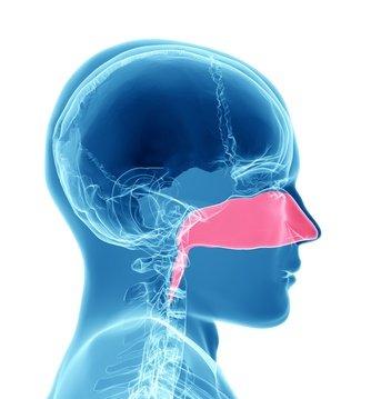 Cancer du nez : Tout savoir sur les tumeurs des fosses nasales et des sinus