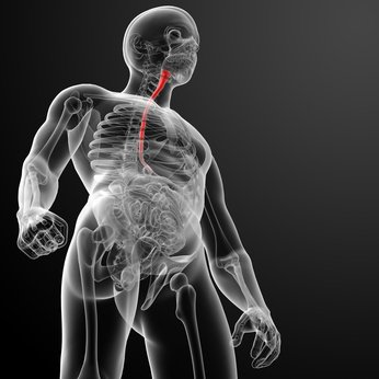 Quels sont les traitements du cancer de l'œsophage ?