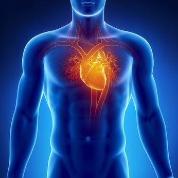 Tout savoir sur les tumeurs et le cancer du coeur