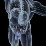prostate-biopsie